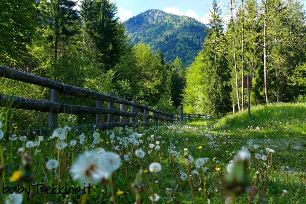 Val Concei coi bambini: sul sentiero naturalistico in passeggino