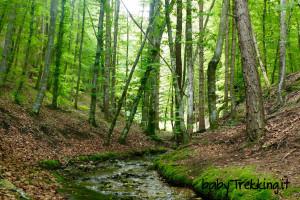 Acqua e Faggi, il percorso sensoriale per bambini a Fai della Paganella