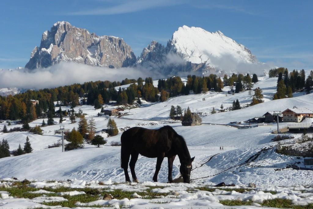 Rifugio Sanon: alla scoperta dell'Alpe di Siusi col passeggino