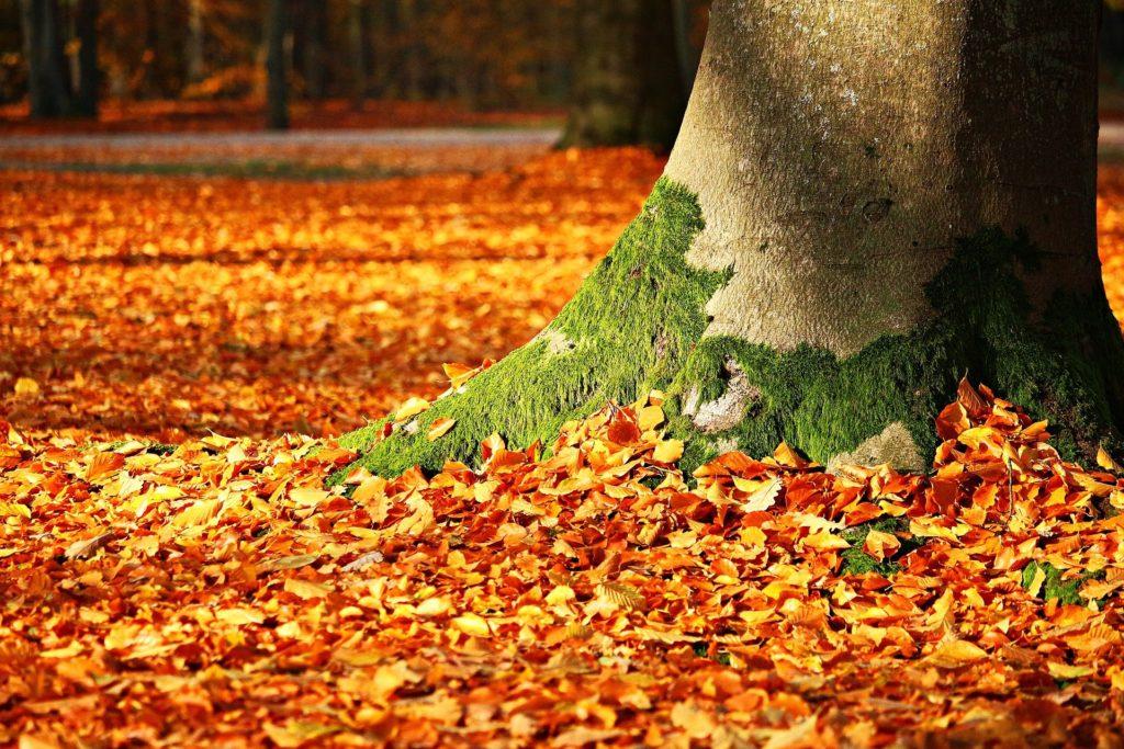 Ammirare il foliage d autunno  coi bambini all Oasi Zegna  4e6df8ef844