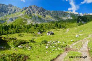 Rifugio Vallaccia, coi bimbi tra i verdissimi pascoli del Monzoni