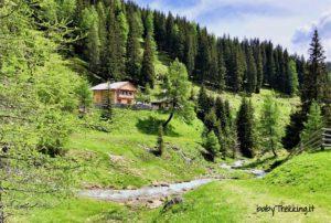 Malga San Silvestro: nella valle incantata con passeggino e cani