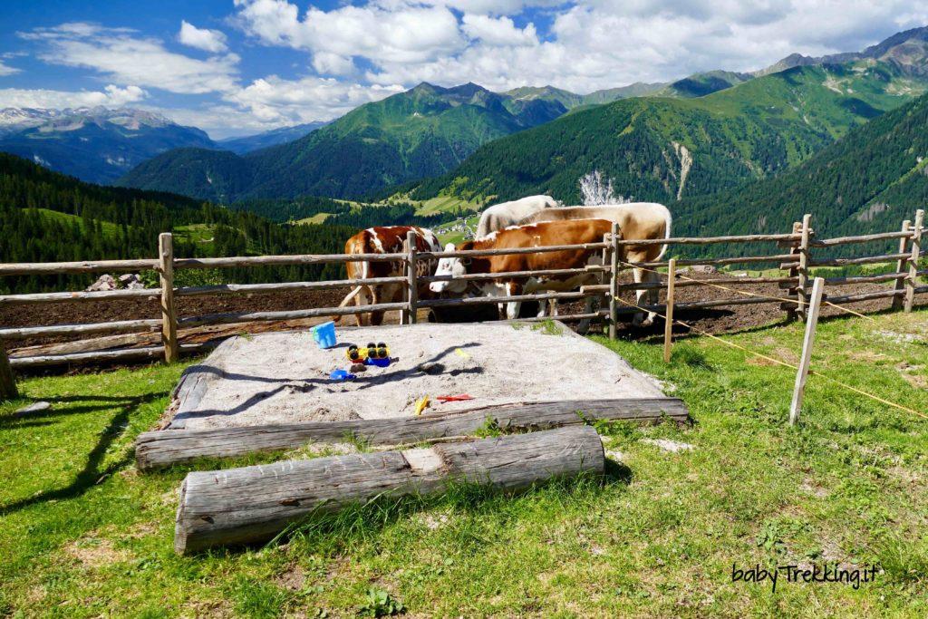 Malga Lauregno, tra Val di Non e Val d'Ultimo in passeggino