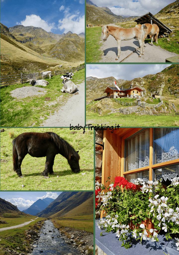Timmelsalm: camminare in Val Passiria col passeggino