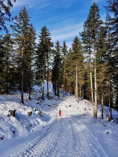Rifugio Jora con le ciaspole: in inverno a San Candido