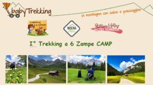 Trekking a 6 zampe Camp