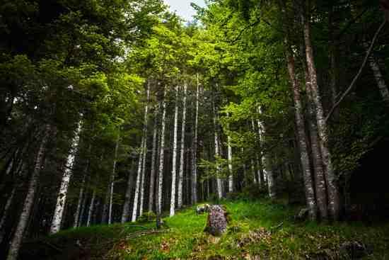 Nel bosco della Val di Nos