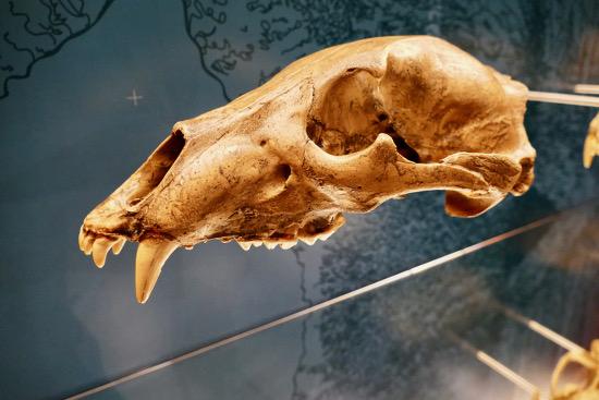 Museo Ursus Ladinicus