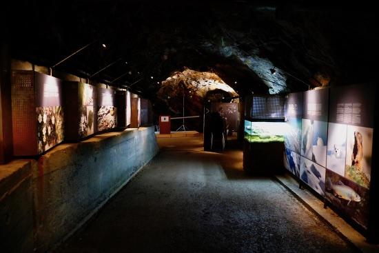 Bunker Mooseum