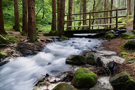 sentiero bosco e acqua