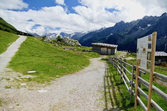 Ahorn Zillertal