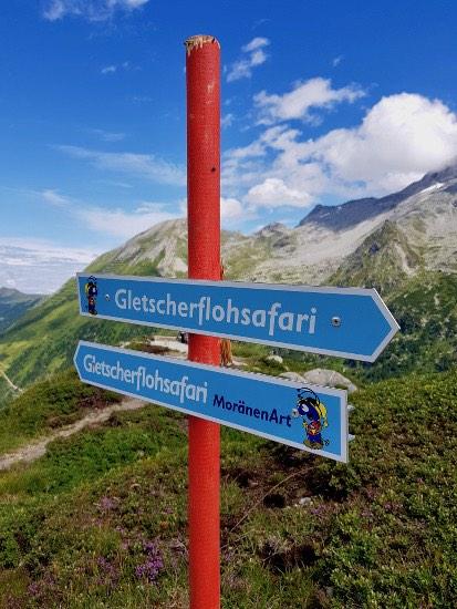 gletscherflohsafari