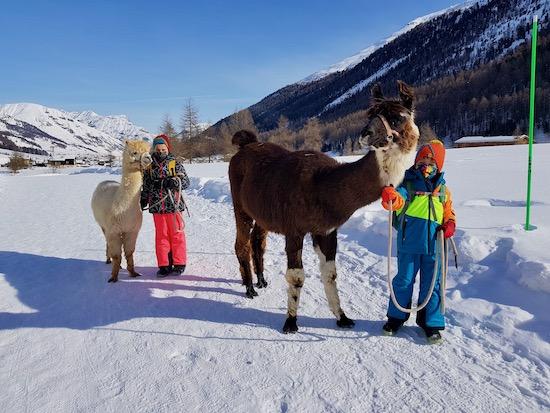 Trekking con lama e alpaca