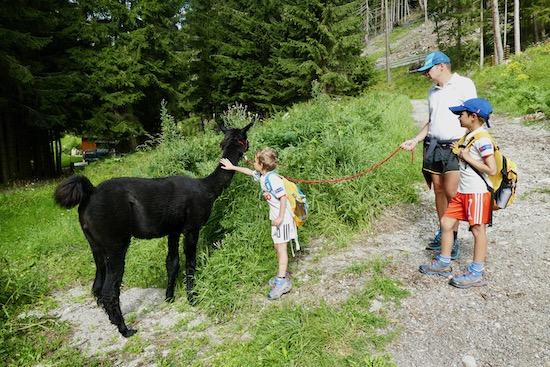 Trekking con i lama Mallnitz