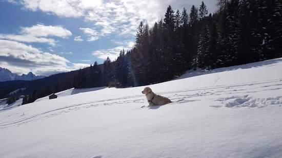 Fiocco di Neve Dog Friendly