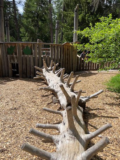 albero equilibrio bosco Dobbiaco