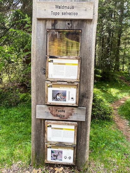 informazioni animali del bosco