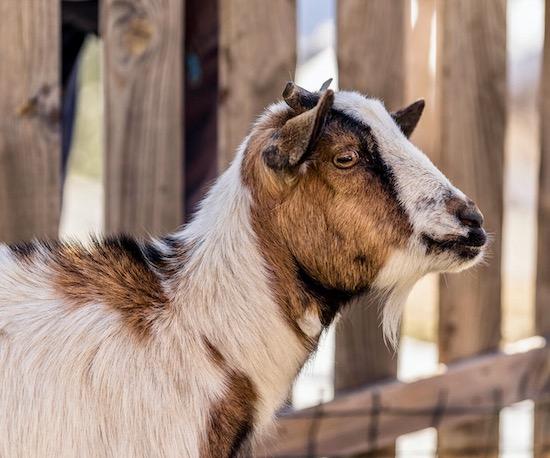 Dolomites Farm