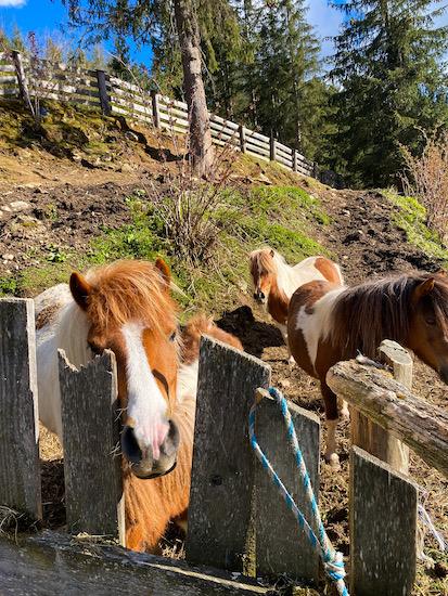 burgerhof cavalli