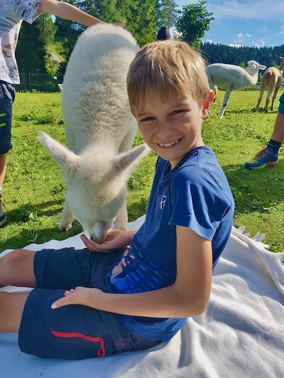 picnic con alpaca