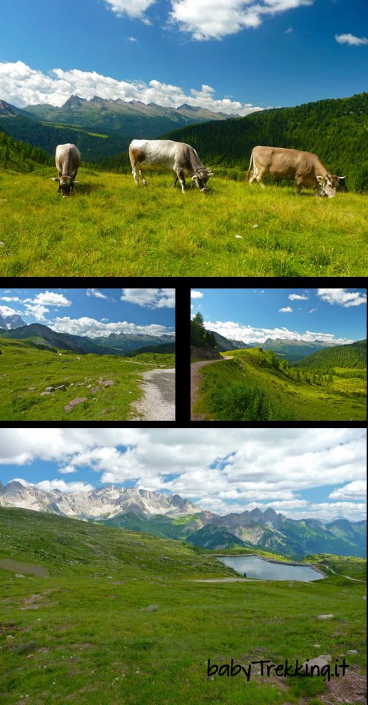 Rifugio Laresei: splendidi panorami col passeggino