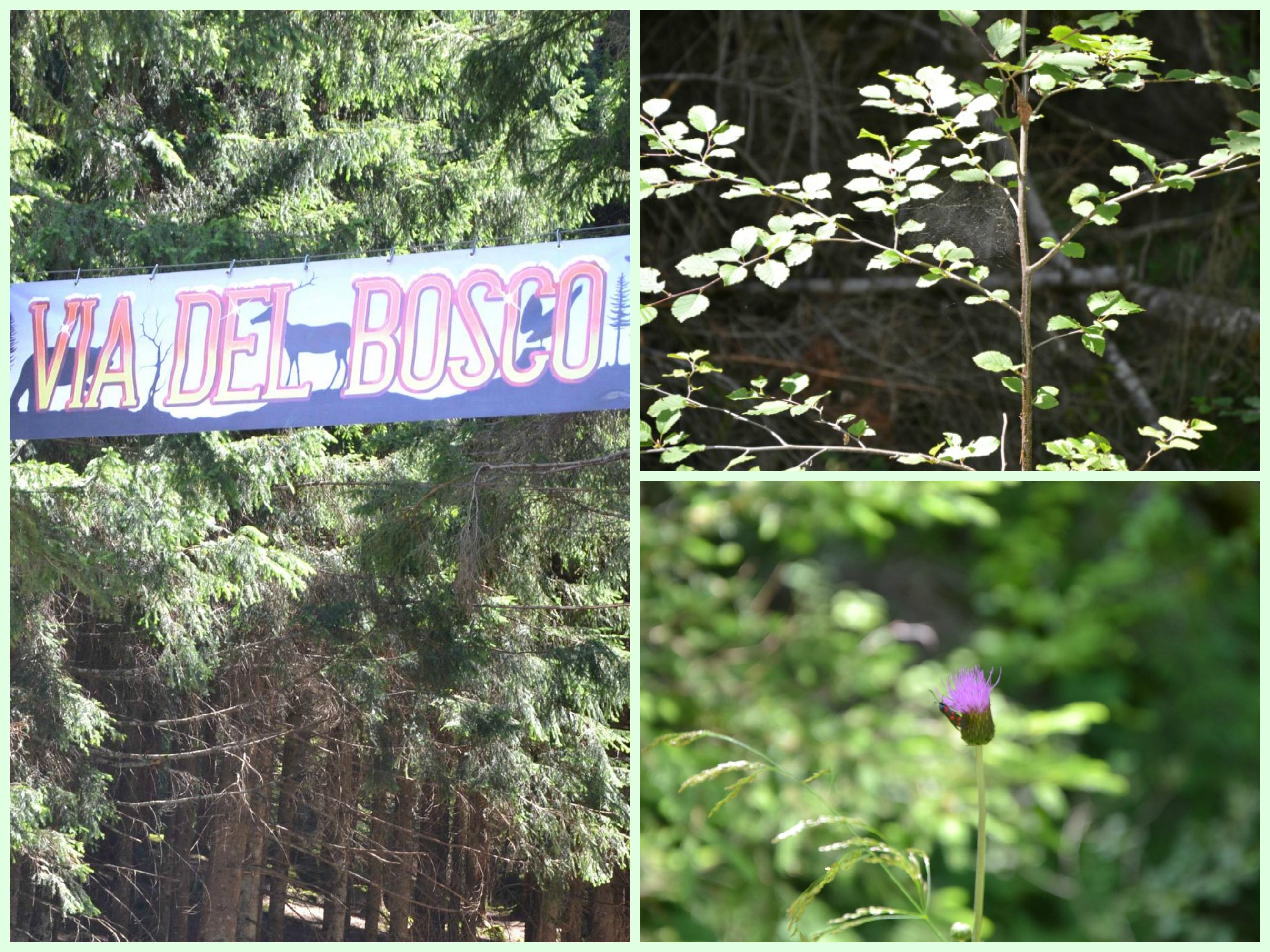 Cavalese, un weekend coi bambini tra le Dolomiti
