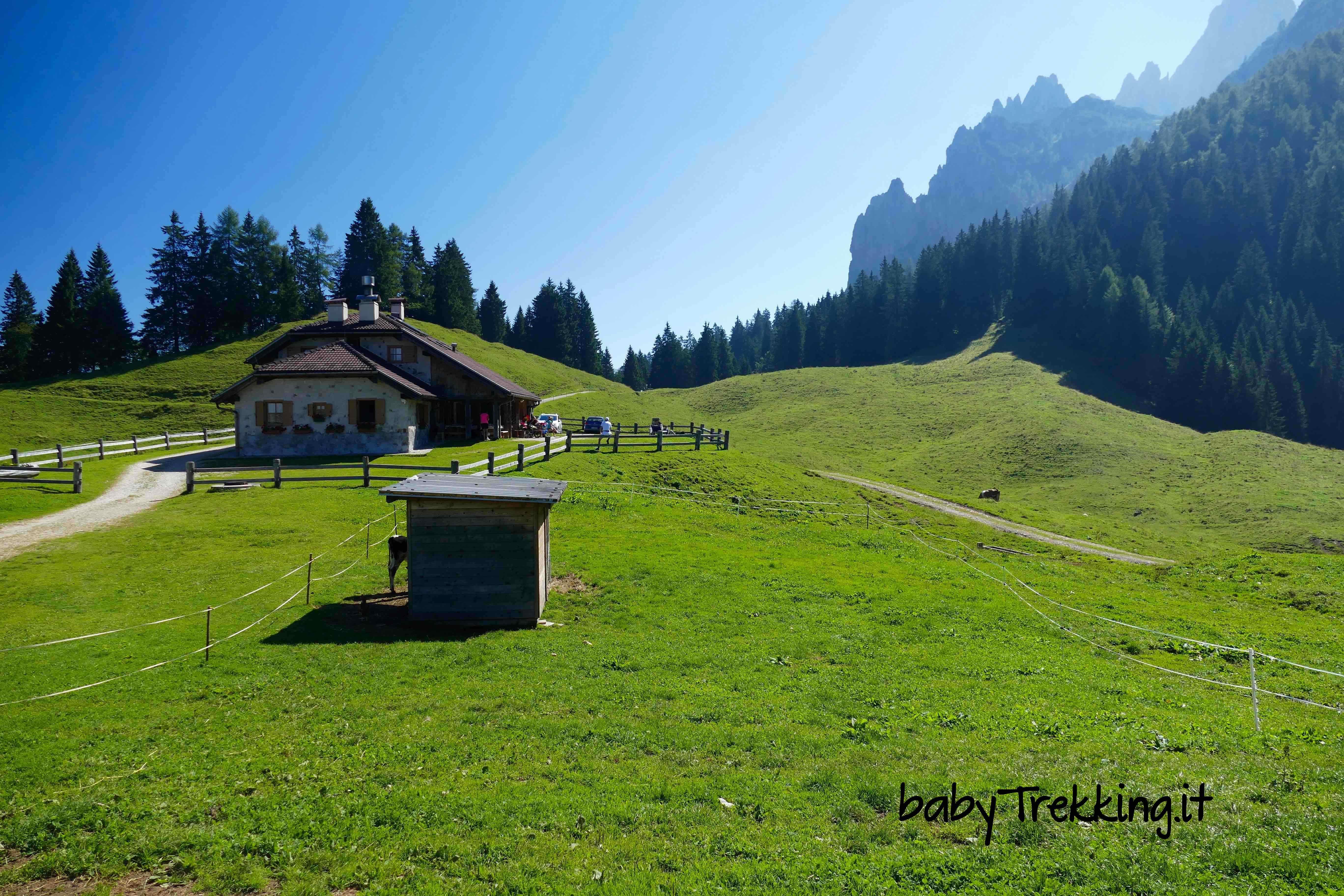 Da Passo Cereda a Malga Fossetta, col passeggino nel verde relax