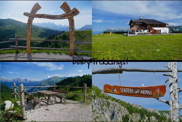 Il Sentiero degli Animali sull'Alpe Lusia: alla scoperta degli abitanti del bosco