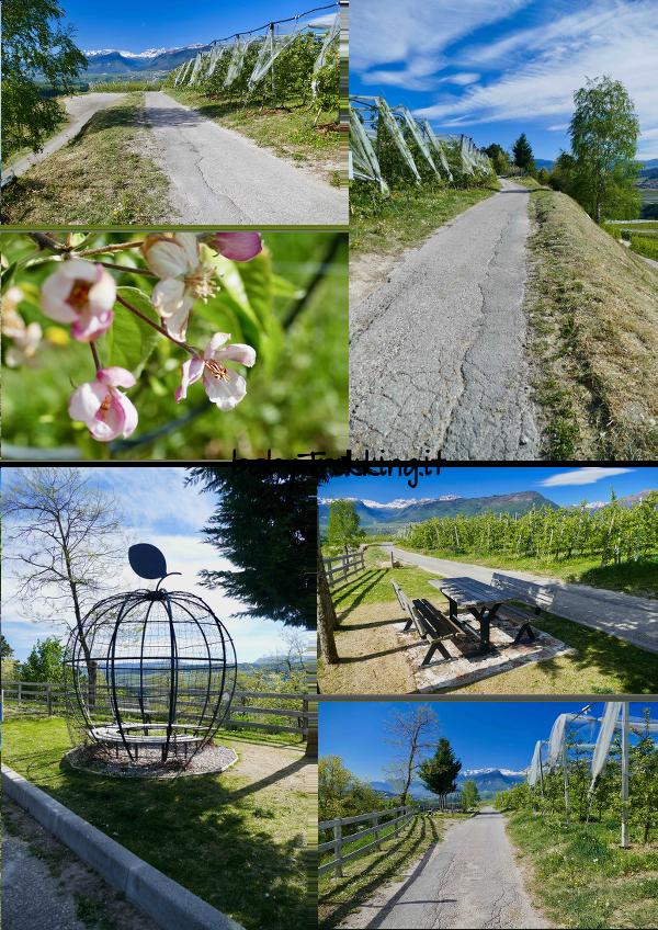 AlMeleto: il percorso tematico per imparare le curiosità sulle mele della Val di Non
