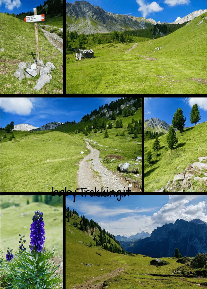Rifugio Vallaccia, coi bimbi tra i verdissimi pascoli dei Monzoni