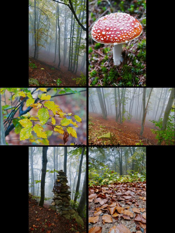 Ammirare il foliage d'autunno: coi bambini all'Oasi Zegna