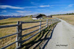 Val Pusteria coi bambini: sull'Alpe di Rodengo col passeggino